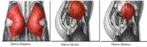Mushcii fundului
