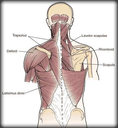 Muschi spate