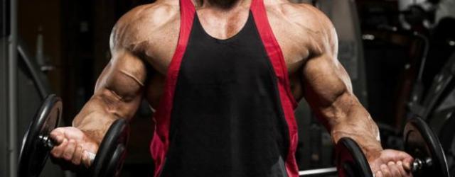 Impartire antrenament masa musculara