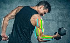 Tipurile de fibre musculare