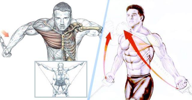Exercitii piept inferior vs superior