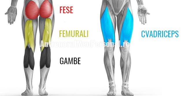 Exercitii pentru Picioare - Grupe de Muschi