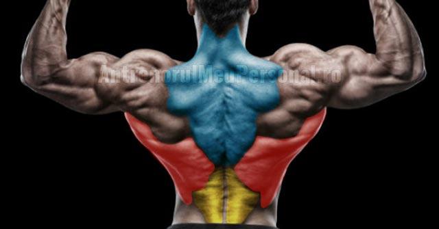 Exercitii pentru spate - Grupele musculare